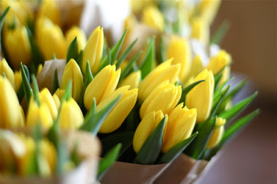 6. happy spring tulips