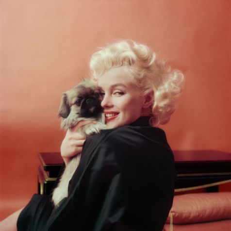 hbz-marilyn-marilyn-goes-oriental-with-a-pekenese-dog-ny-1955-milton-h-greene-archive-images
